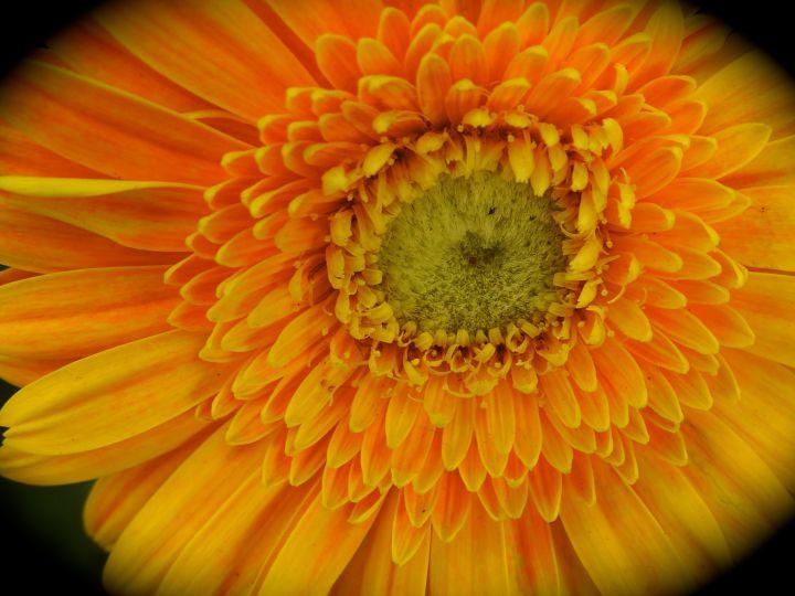 orangeclock
