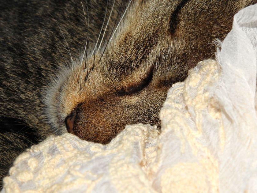 sleepyhead.jpg