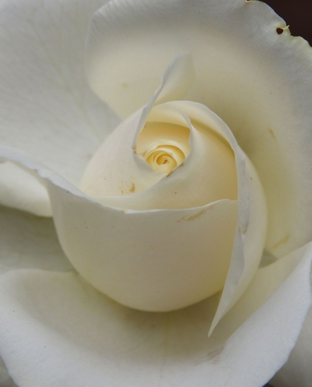 whitelover