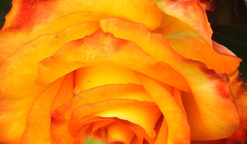yellowapsara