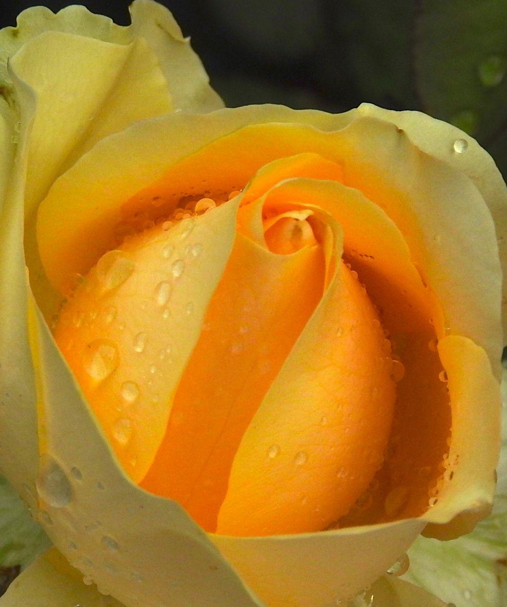 yellowloveletter