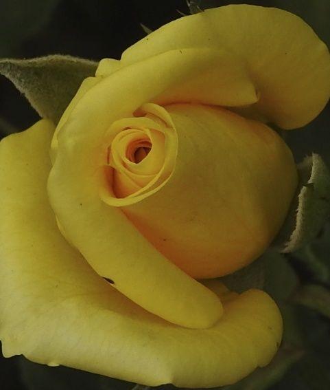 yellowpencils