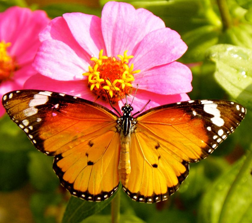 butterflymorning