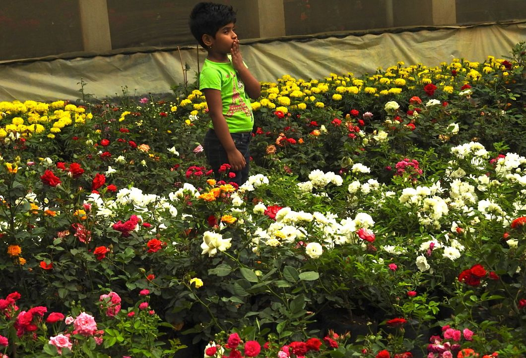 stalker-of-the-roses