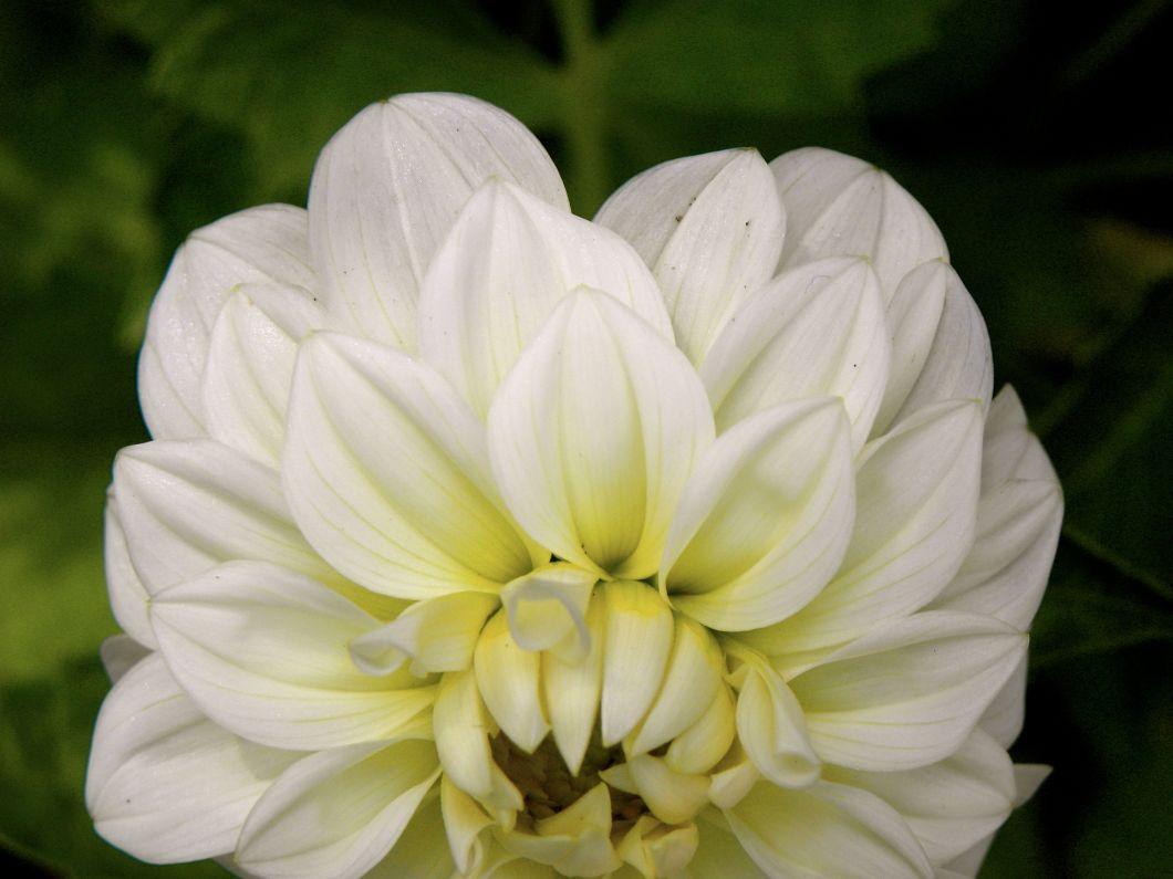whiteruffle3
