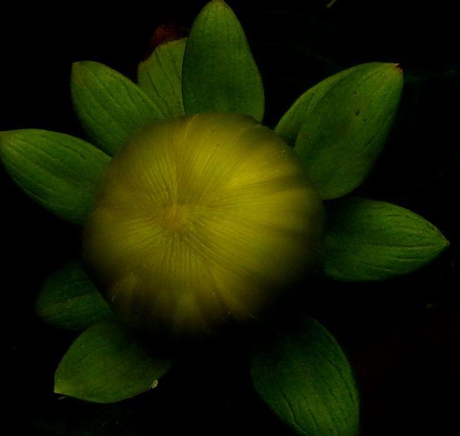 emeraldgold