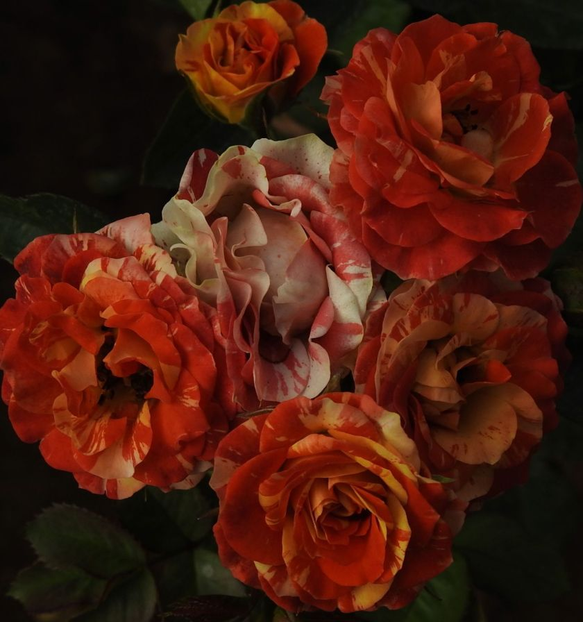 rosesthat