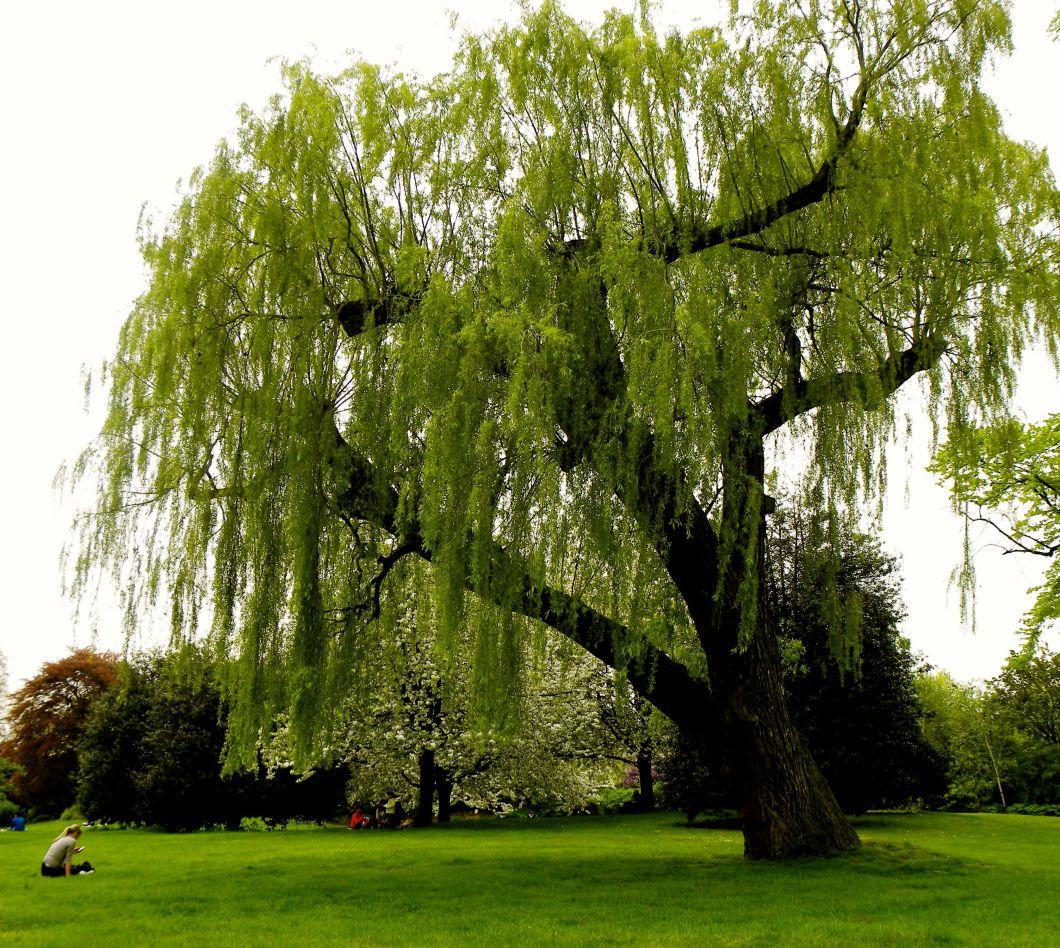 treecan.jpg