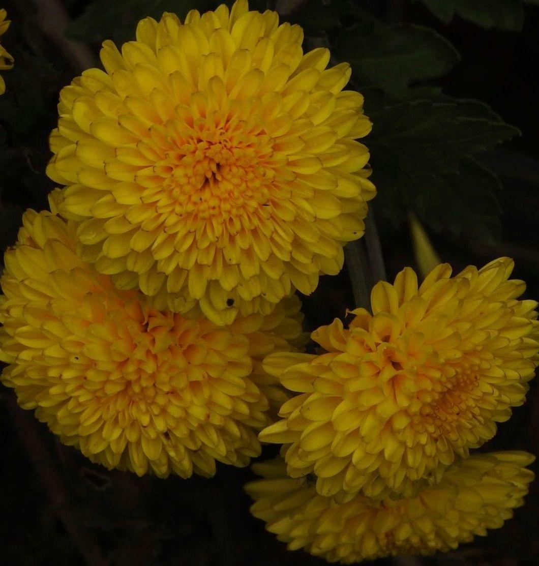 yellowrecipes1
