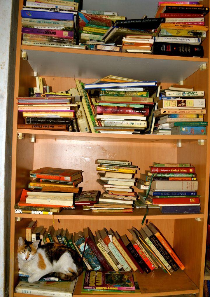 booksandkitty.jpg