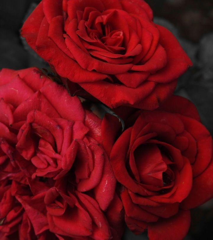 heartfeltroses