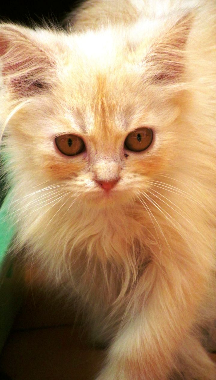 kittylitter.jpg