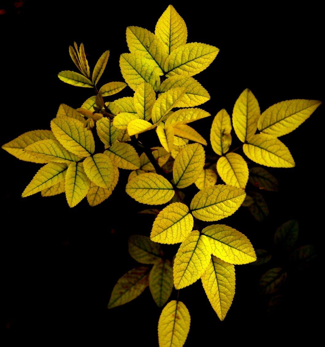 leafs-through