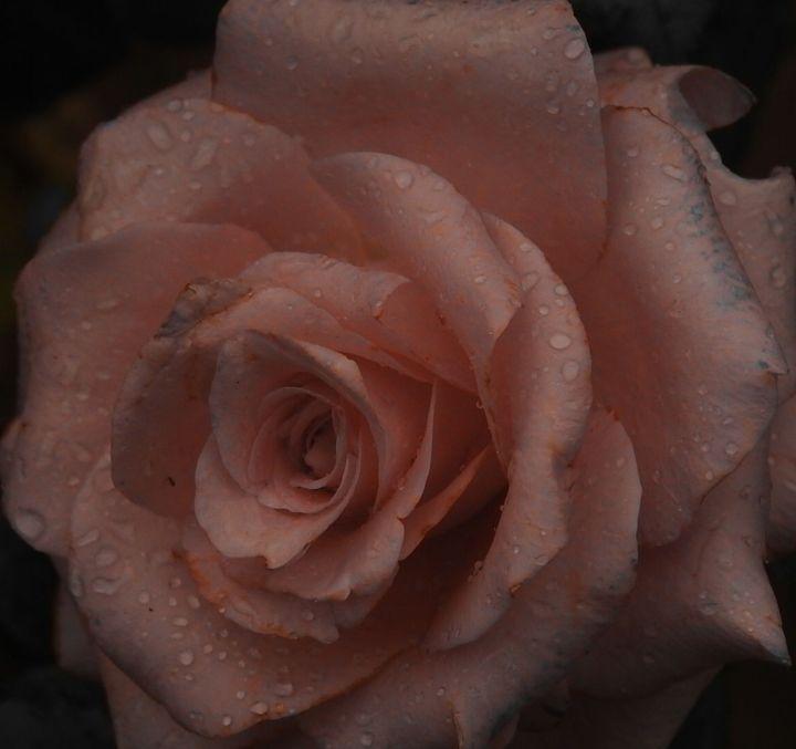 pinkswirl