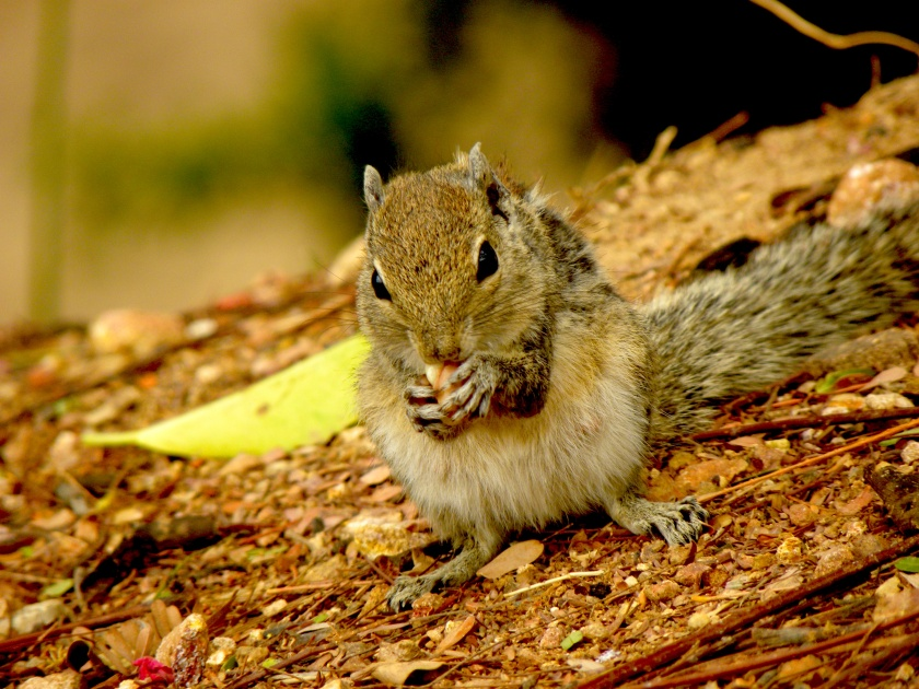squirrelmorn.jpg