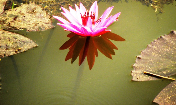 bloom-052