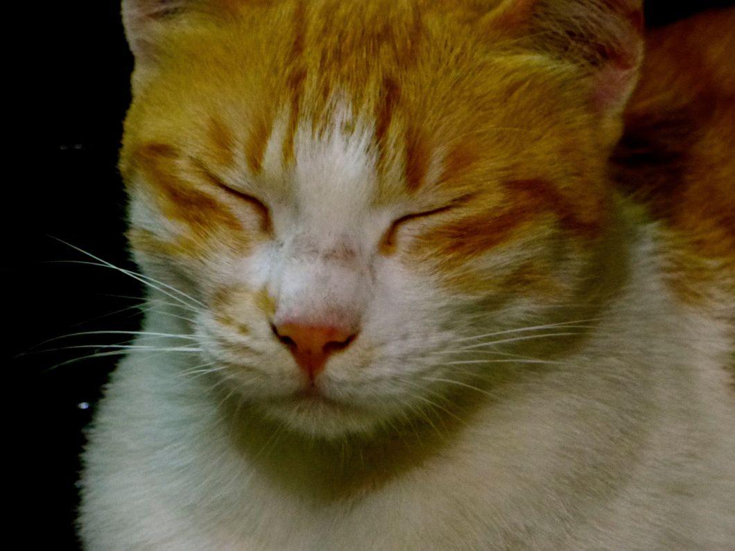 cat&mouse.jpg