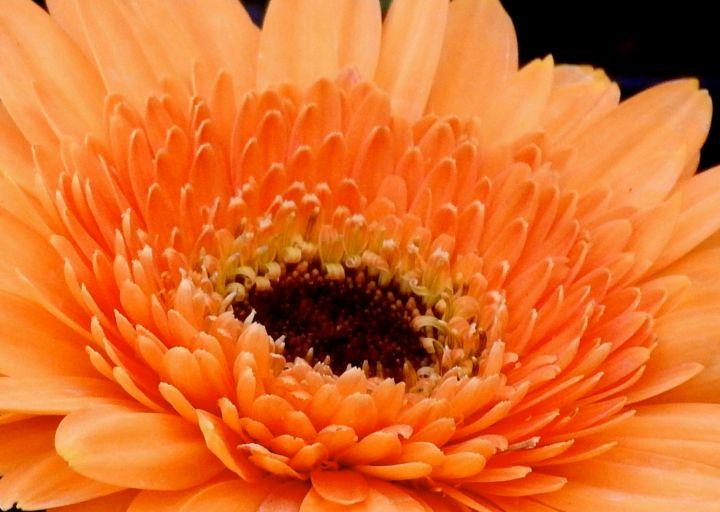 orangepie