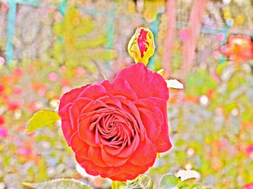 colorplant