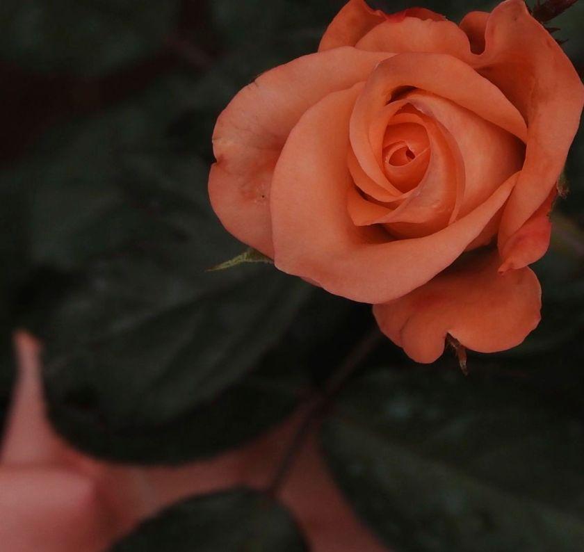 floraldresscodexxx
