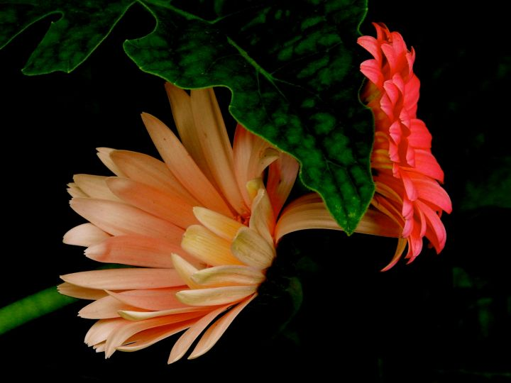 petalconsultations