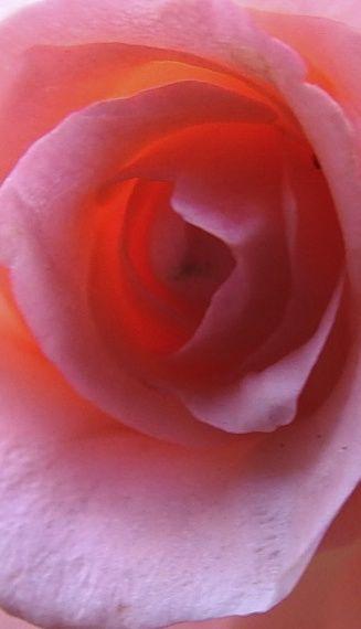 pinkdresser