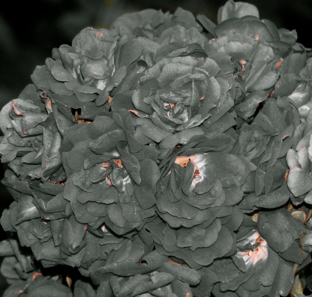 silvergraceobama