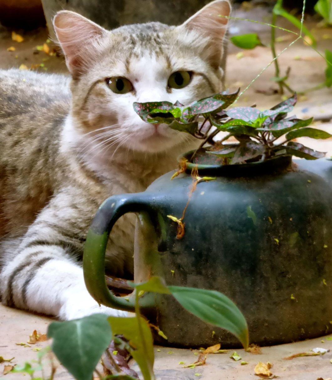 cat-gardeningpolkadots