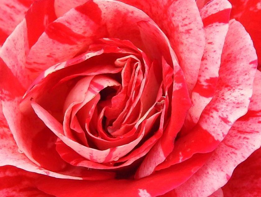 floweringoftheday