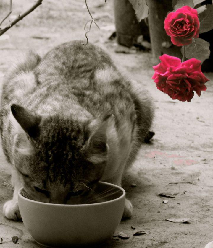 gardencat