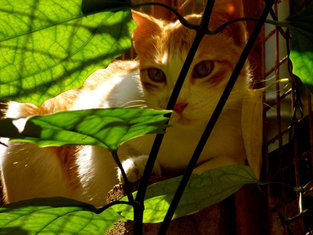 Cat-Gardening: It makes Leaf Sense! – Canny Catnip Nook