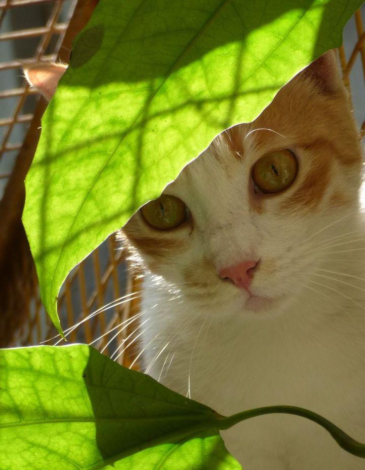 leafsense
