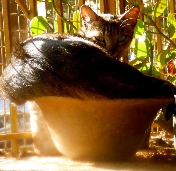 oddcatt