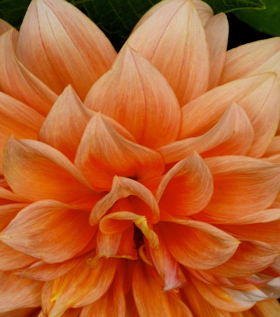 orangepudd