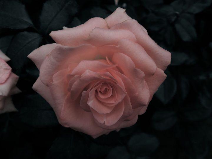 pinkprayer
