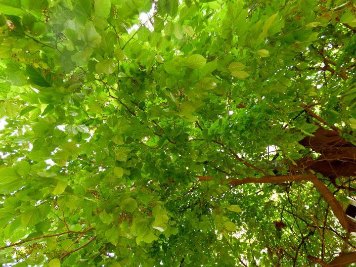 sparklinggreen