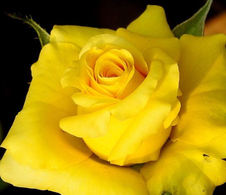yellowcupcake