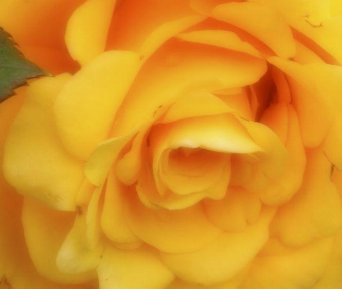 yellowmix