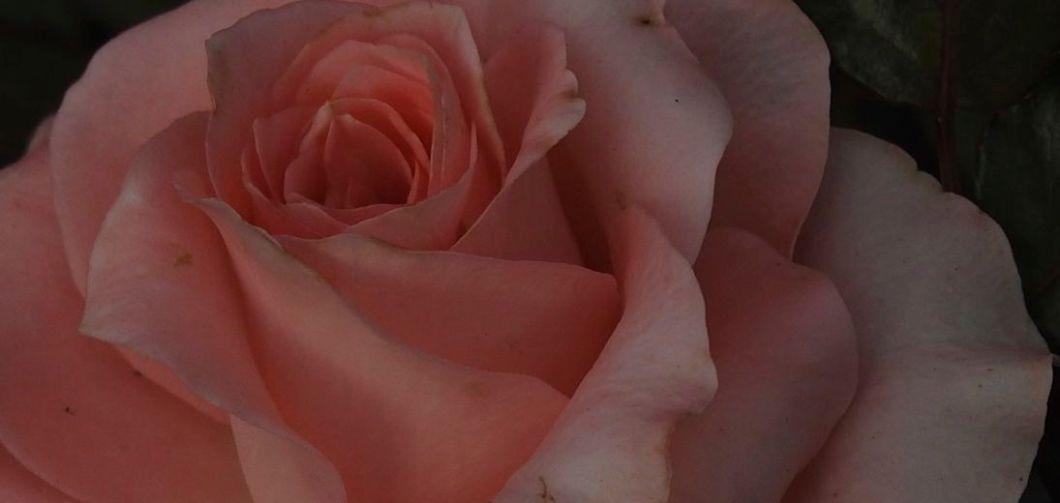 flowertale2