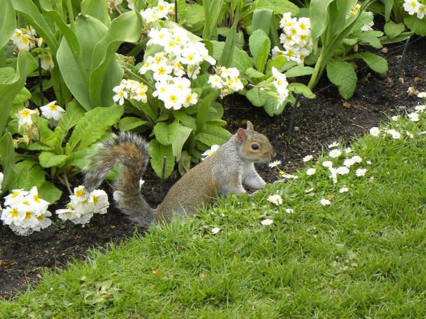 kisssquirrel.jpg