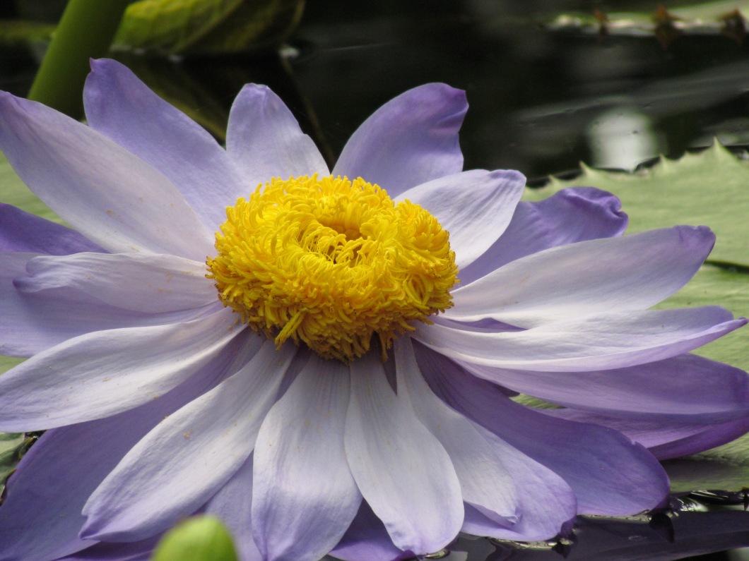 purpledoll