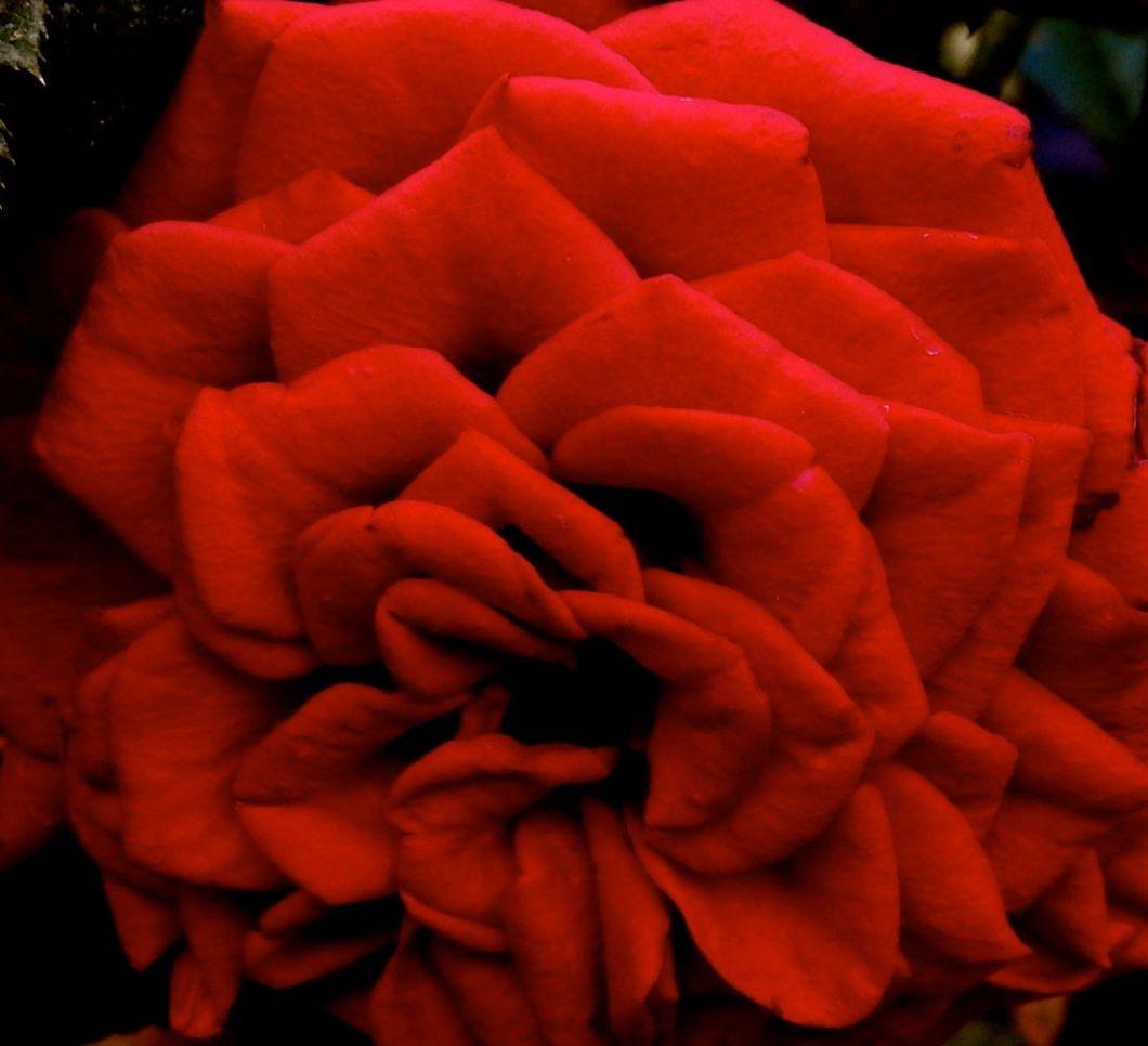 redpurse
