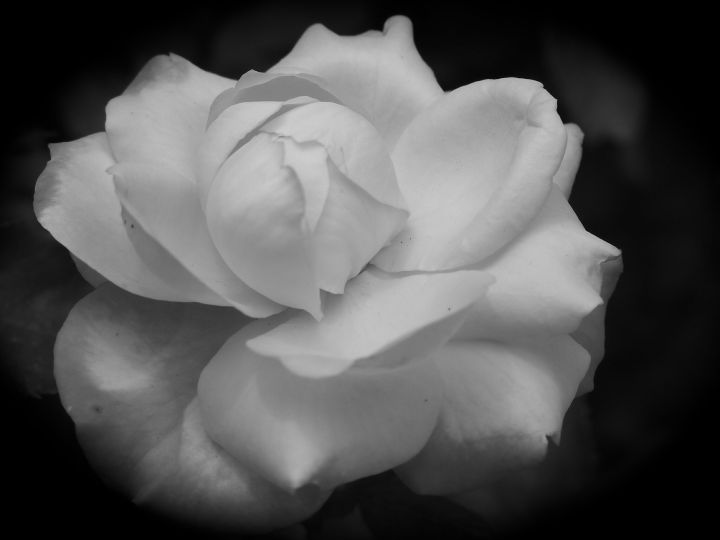 whitesolitude
