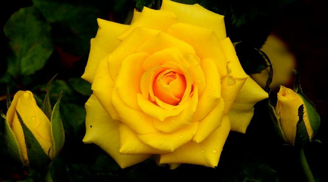 yellowpress1