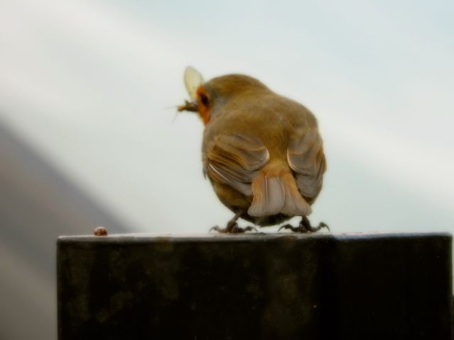babybird1