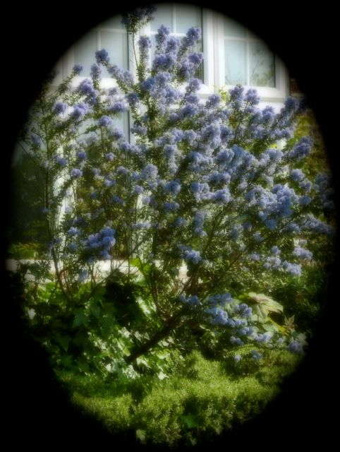 bluewindow