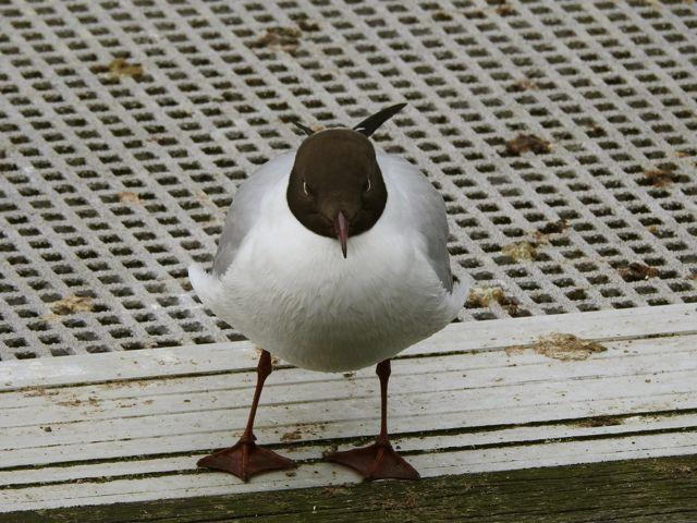 onetinybird