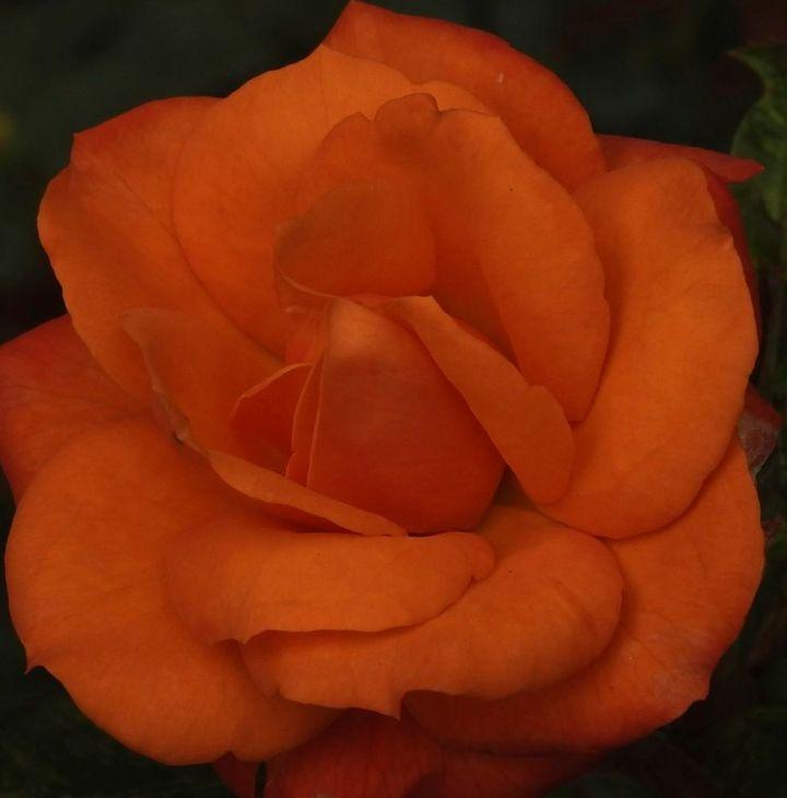 orangemenu
