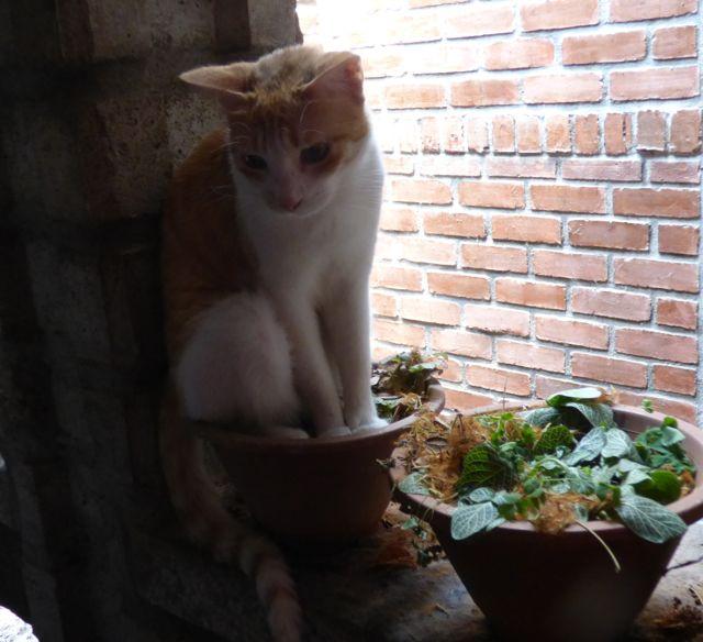 pussygarden