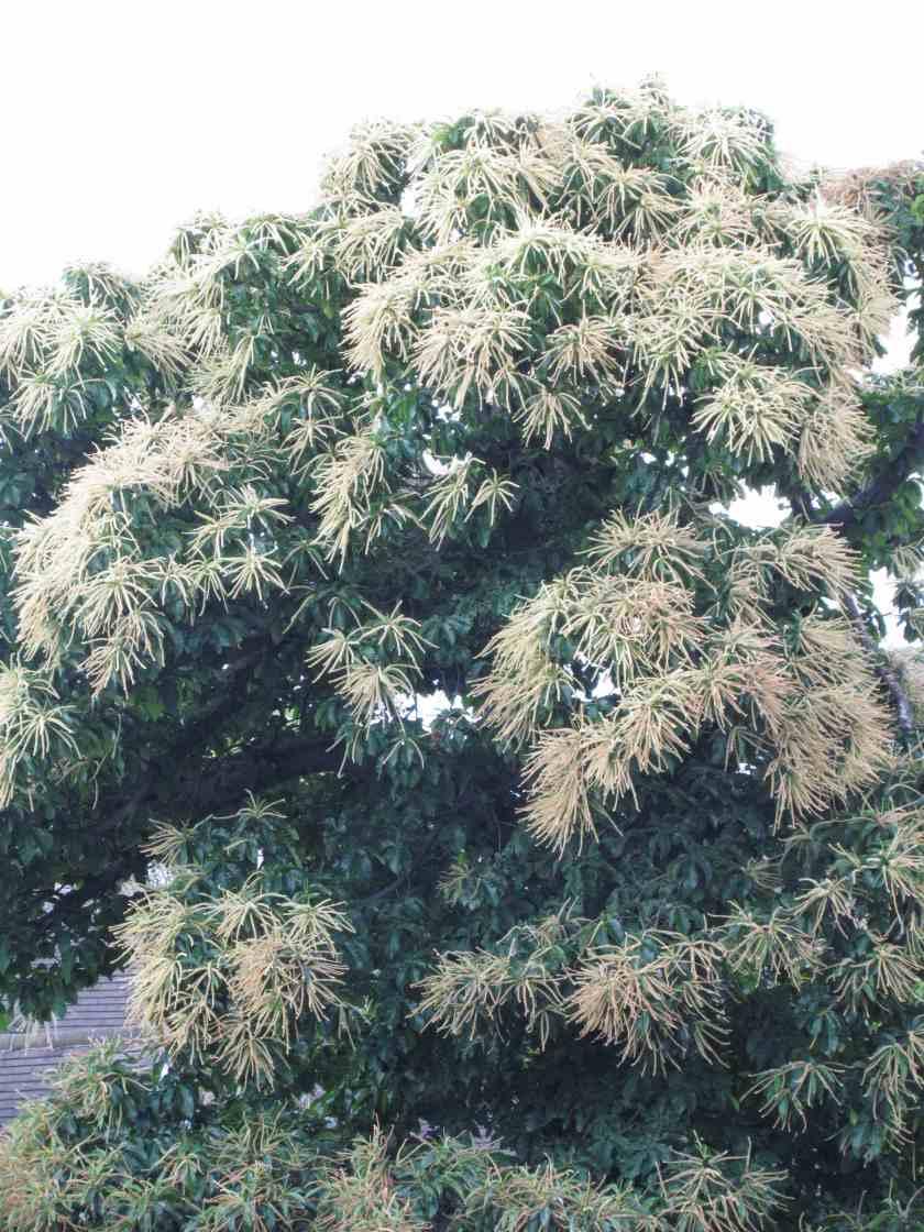 glorioustree